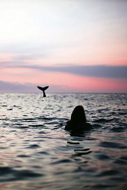 Now that is whale watching!