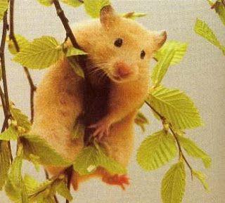 Hamstercitos :3: El Lenguaje Corporal del Hamster