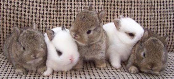 Bunnies, bunnies, bunnies...
