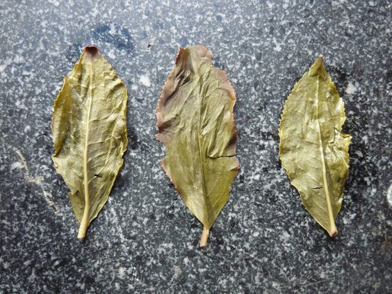 2014 Bao Zhong Imperial tea leaves after brewing.