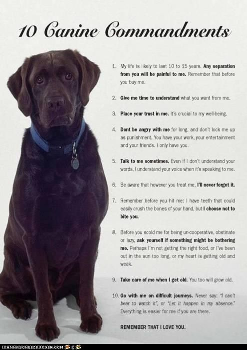 """Ten Canine Commandments....starts with a smile, then an """"aww"""" moment, then tears, then as soon as you finish reading, you walk or run or simply look down at your feet(or in my case next to me in bed) and you hug your dog, and whisper I love you in there ear.....if you dont you cannot love your dog as much as me...unless you are reading this and you are not at home........."""