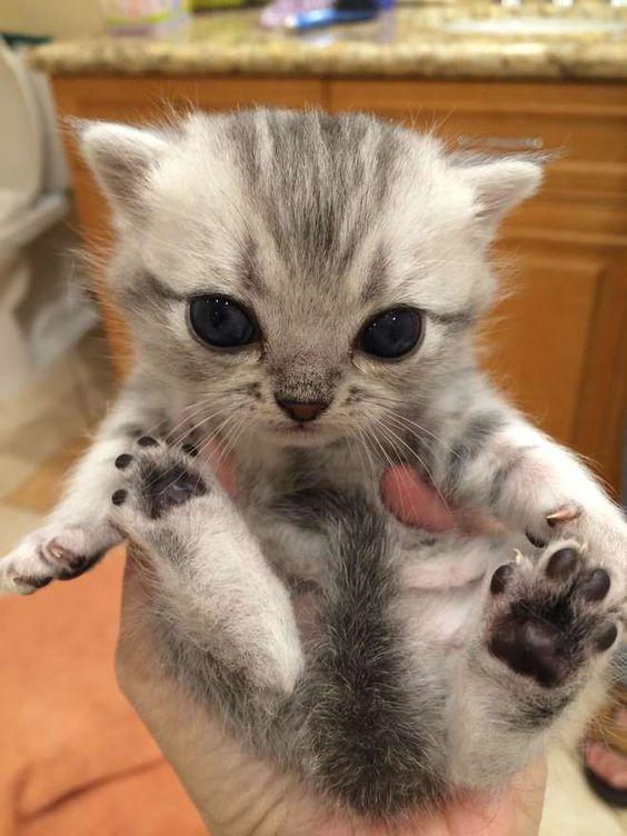 photos de chats... Chats