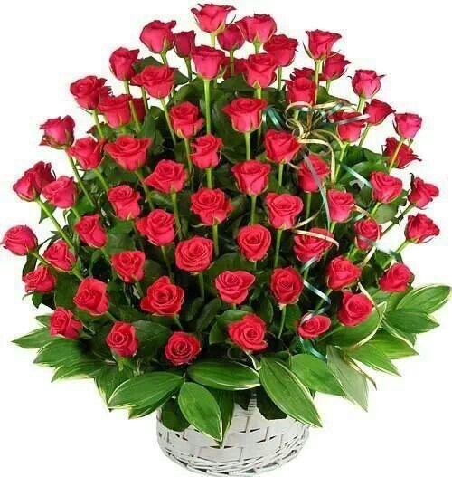 Pretty roses: