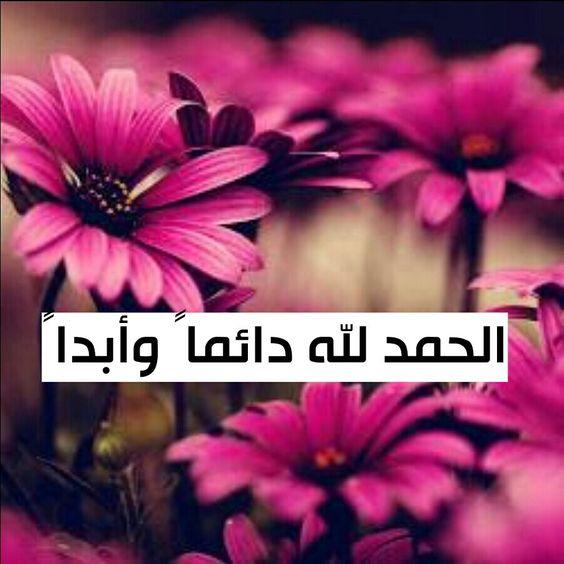 Pin By حمودة صلاح حسني باشا On Ayaz Plants Lockscreen Lockscreen Screenshot