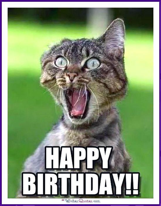 Happy Birthday Memes Cats Dogs Animals 20 Best Birthday Cat Meme Cat Birthday Memes Happy Birthday Cat Happy Birthday Sister Funny