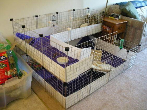 Homemade guinea pig cages ideas guinea pig homemade cage for Diy c c guinea pig cage