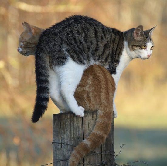 A física esta errada dois gatos ocupam o mesmo espaço.