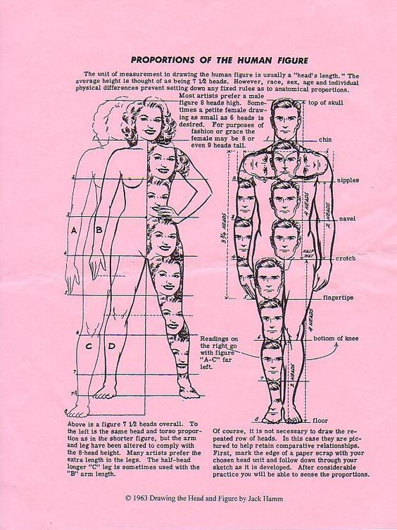 Character Design Proportions : Disney body proportions and jack o connell on pinterest