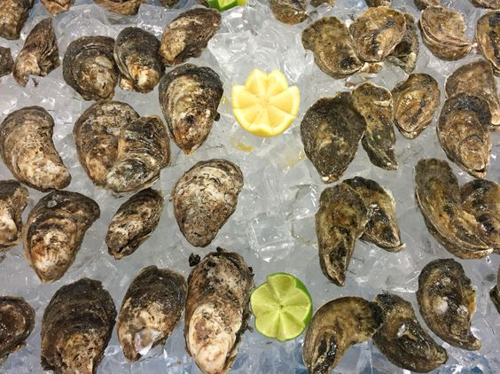 Fresh J&W Seafood Wild Caught Oysters on Display at the America's Food & Beverage Show in Miami, Florida.
