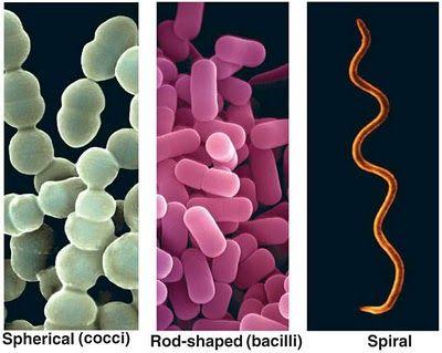 celula prokaryote ed eukaryote pdf free
