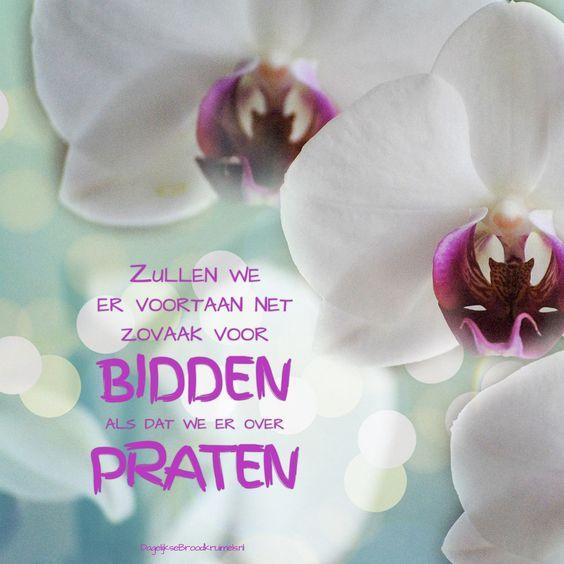 Zullen we er voortaan net zo vaak voor bidden als dat we er over praten  #Bidden, #Wijsheid  https://www.dagelijksebroodkruimels.nl/bidden-praten/