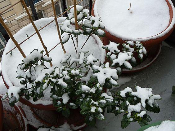 Mon balcon sous la neige  http://www.pariscotejardin.fr/2013/01/mon-balcon-sous-la-neige/