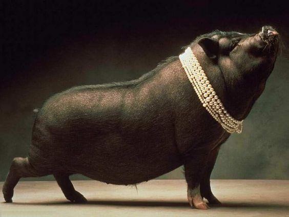 L'eleganza del Porco  dat ass