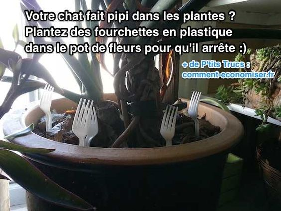 Comment Empecher Un Chat De Faire Ses Besoins Dans Les Plantes
