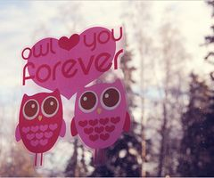 owls. PINK owls<3