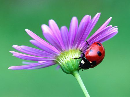 lady bugs are cute