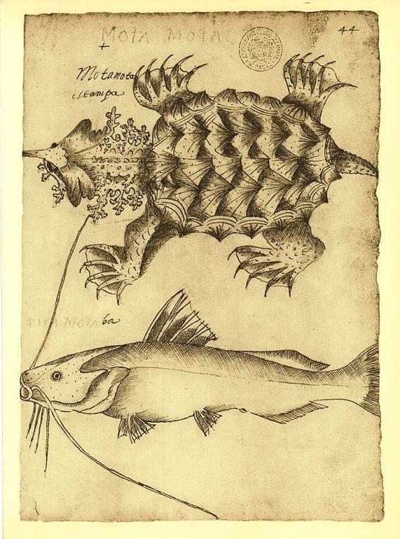 Mata Mata Turtle and Catfish Sketch Drawing by CarambasVintage, $16.00