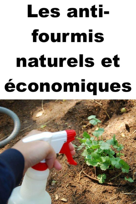 44++ Repulsif naturel contre les fourmis dans le jardin ideas