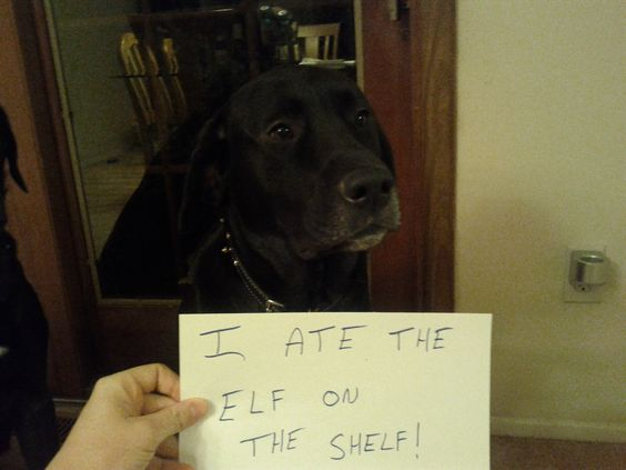 Dog Shaming--I ate the Elf on the shelf!  LOL