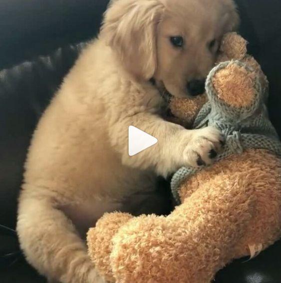 Cachorro está gostando do seu brinquedo