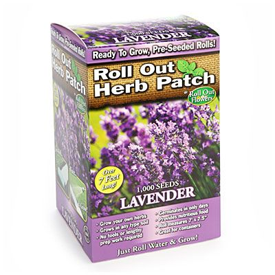 Roll Out Flowers™ Lavender Herb Patch at Big Lots.