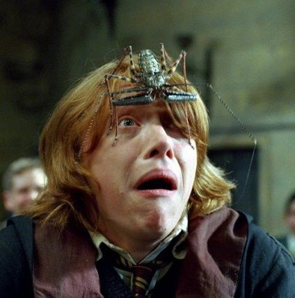 Spiders in Defense Against the Dark Arts ~ Goblet of Fire