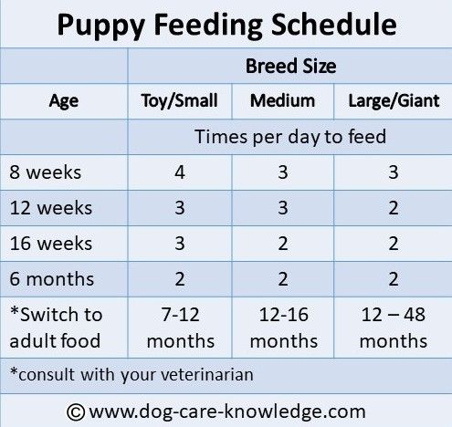 Simple Puppy Feeding Schedule You Absolutely Need Puppy Feeding Schedule Puppy Schedule Puppy Training Tips