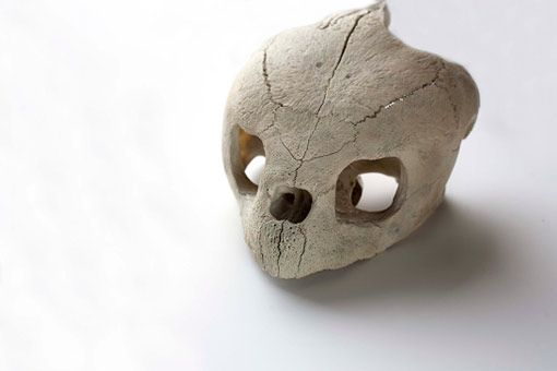 Sea turtle Skull - Google 検索