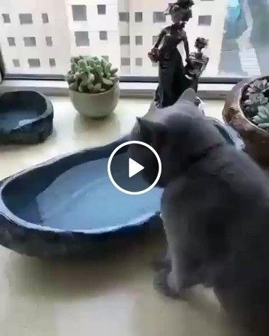 Até o gatinho tem um vizinho desocupado que fica cuidando de sua vida