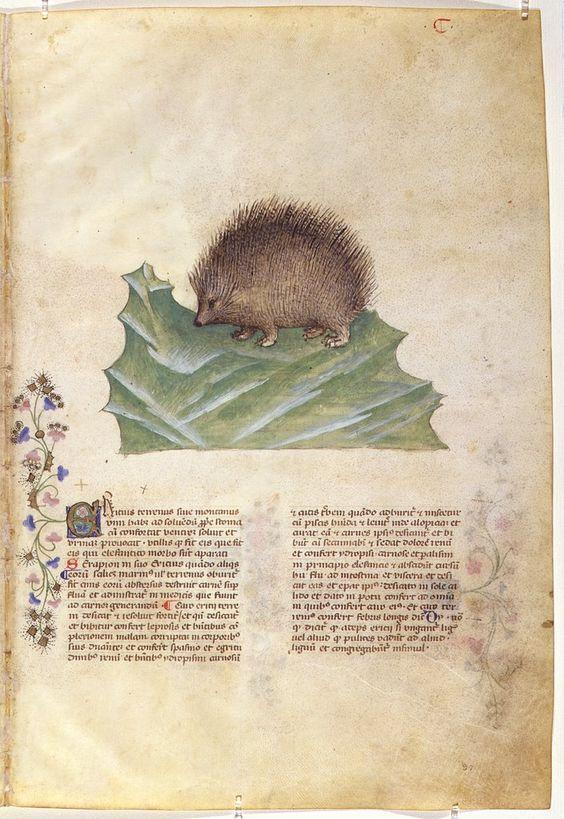 """""""Historia Plantarum"""", 1395/1400, Milan, Italie, text: Pedanius Dioscoride of Anazarbos (40-90 AD), images: Giovannino et Salomone de' Grassi (ca. 1350–1400):"""