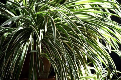 Pin Auf Pflanzen