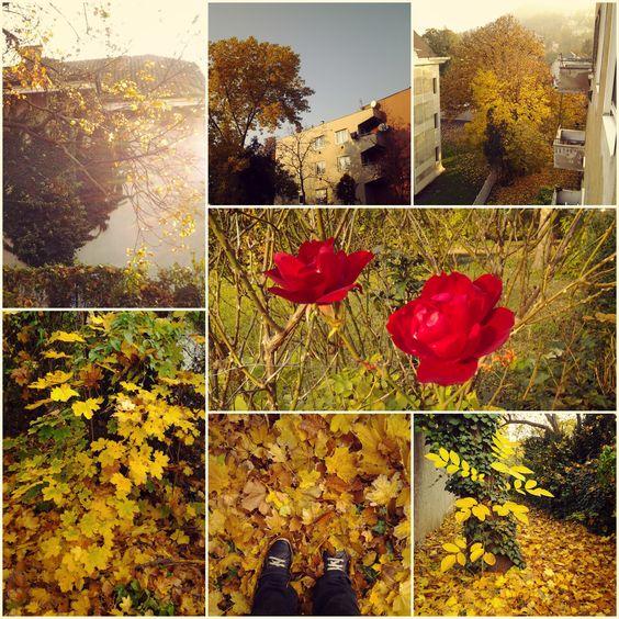 Photos by me. Photos: Diána Rigó - Budapest, in the fall of 2015 #Budapest #Hungary #photography #fall #autumn #Autumn_leaf_color