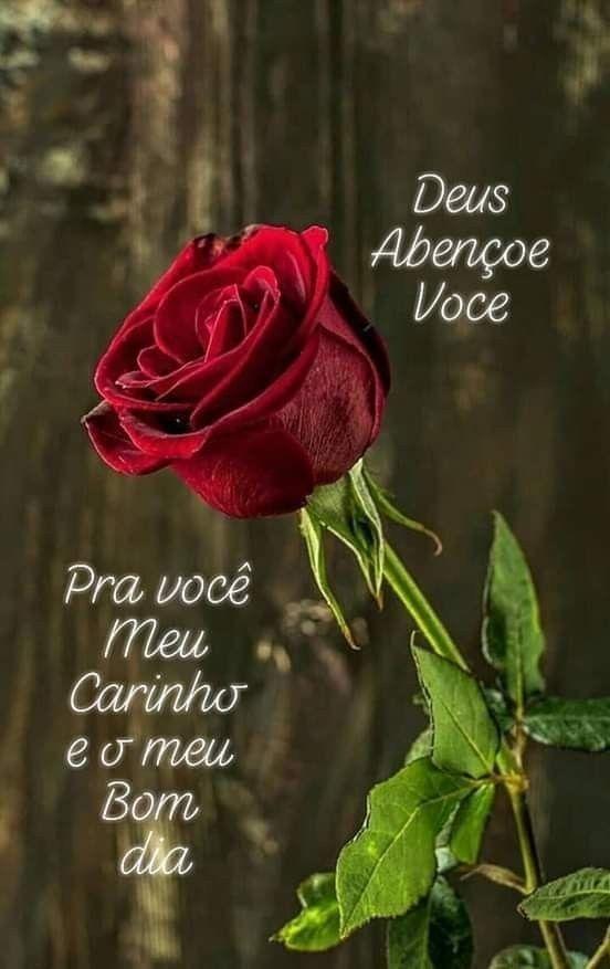 Bom Dia Rosas Vermelhas Botoes De Rosa