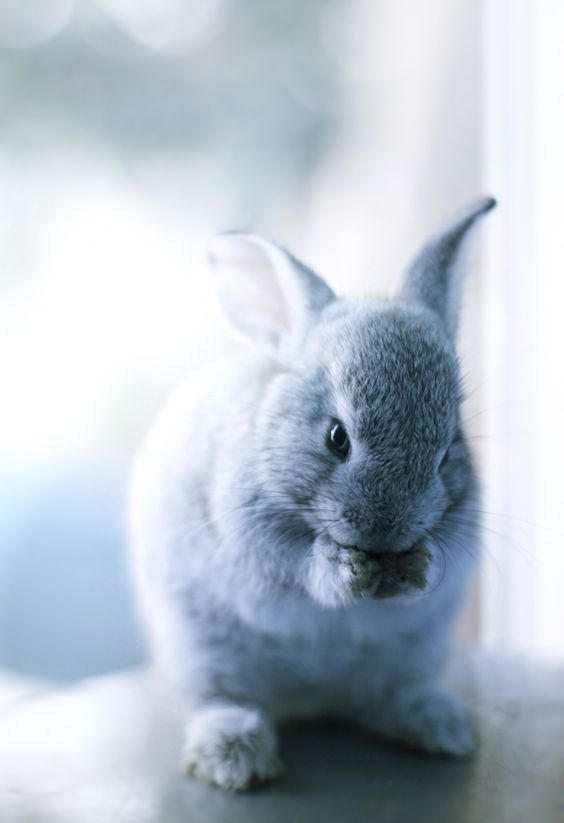 #bunnies #sweet #easter  #colour #photography  #pastels #beautiful  #spring #Frühling #printemps #earrach #vor #Primavera