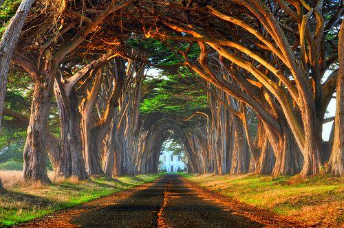 Tree Tunnel, Point Reyes, California
