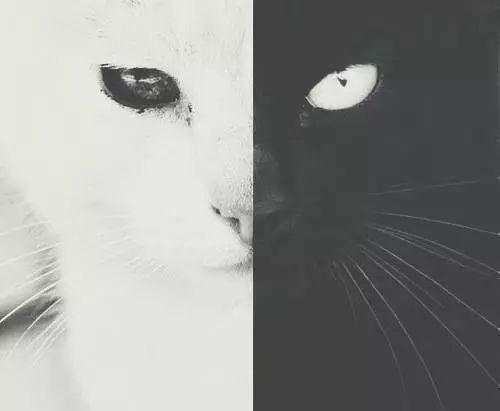 catssss| | via Tumblr on We Heart It