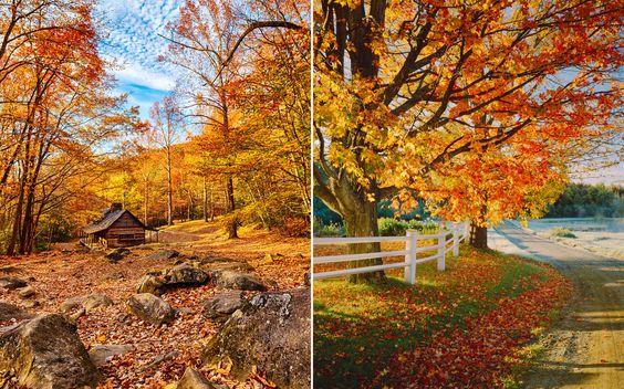 Fall foliage predicting map