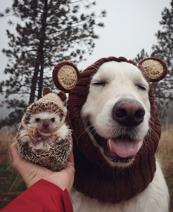 Knit Dog Snood Hat - Grizzly Bear Zoo Snood – Zoo Snoods
