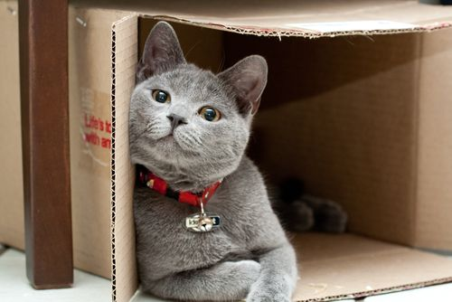 There is nothing like a box.  Cute Cats don't have to be kittens.