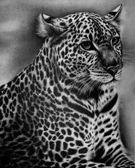 Graphite Drawings - Furry Leopard  by Jerry Winick