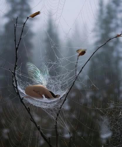 Não lastima as dificuldades que nos ensina a viver...ninguém aprende sem lições...