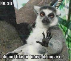 Lol lemurs