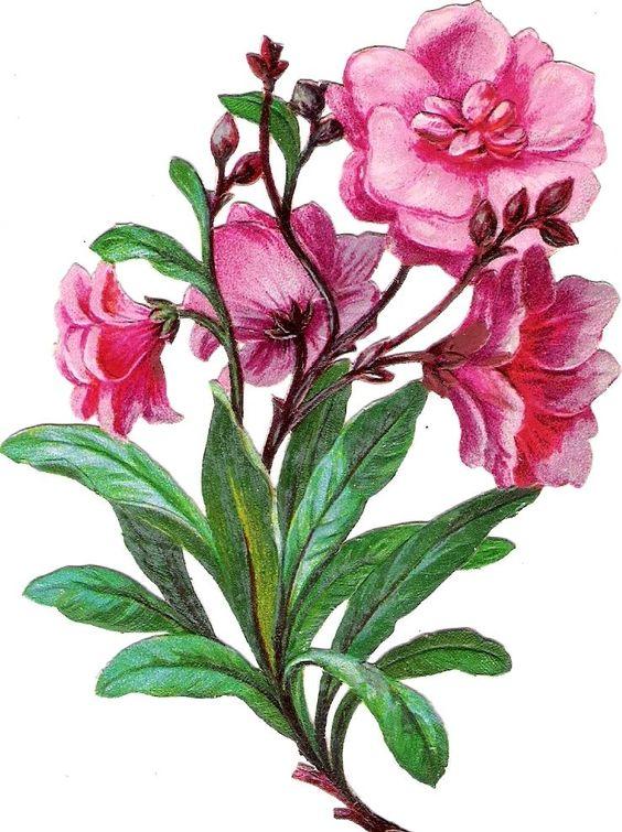 Oblaten Glanzbild scrap diecut chromo Blume  13cm  flower fleur: