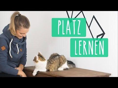 So Lernt Eure Katze High Five Katzentrick Tutorial Youtube