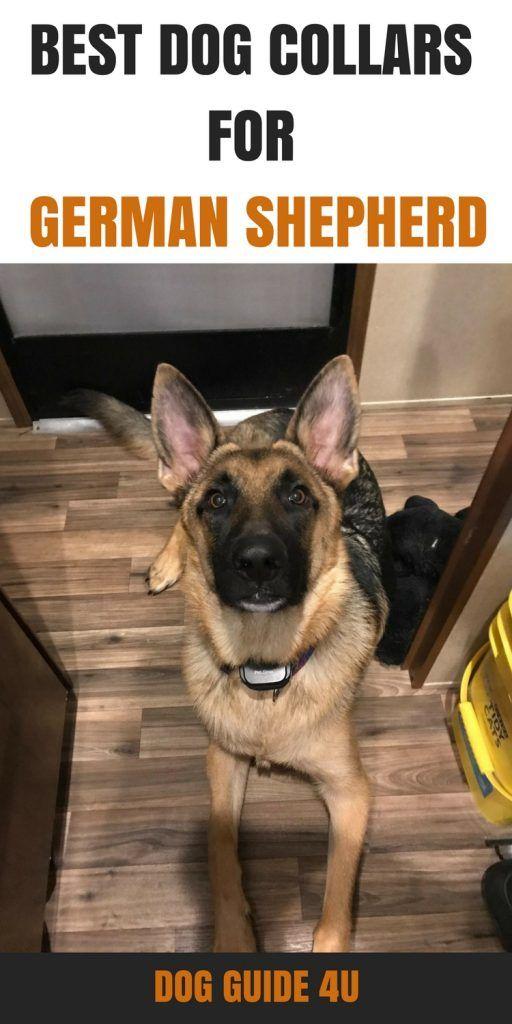 Best Dog Training Collars For German Shepherds Dog Training