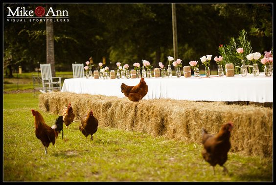 rustic party...chickens welcome...