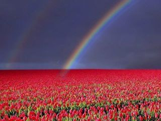 Very beautiful - rainbow + flowers - is this what heaven looks like?