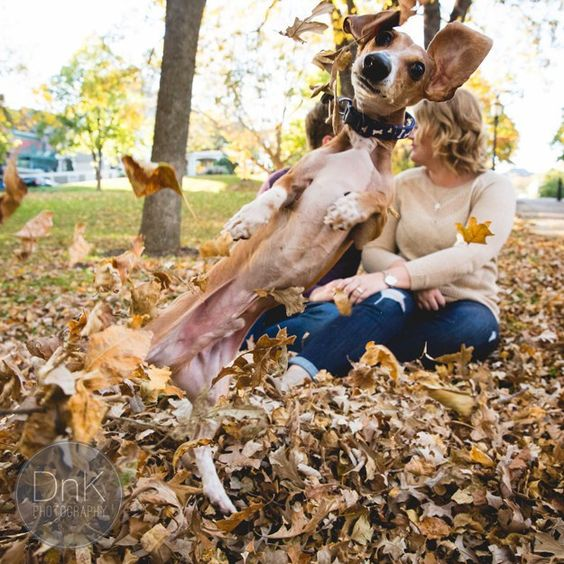 21 Wedding Photos You'll Want To Pin Immediately: #16. This photobombing dachshund.
