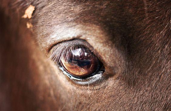 Pferd Auge HD Desktop-Hintergrund: Breitbild: High-Definition ...