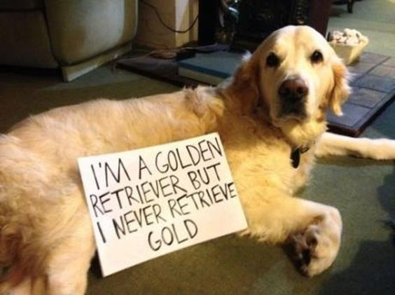I'm a Golden Retriever but I never retrieve gold.